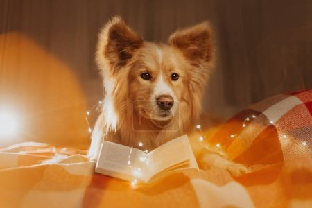 Photo for Mixed breed dog lying down with an open book indoors - Royalty Free Image