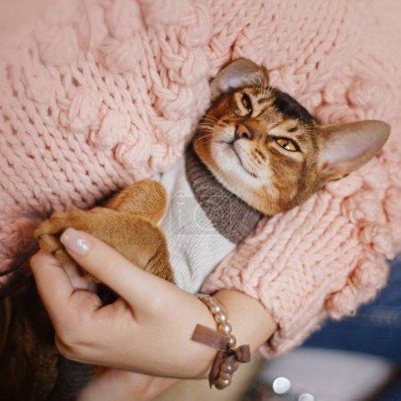 Photo pour Mignon chat abyssinien couché dans les bras des propriétaires à l'intérieur - image libre de droit