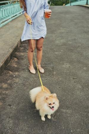 Cropped image of woman walking with her Pomeranian spitz