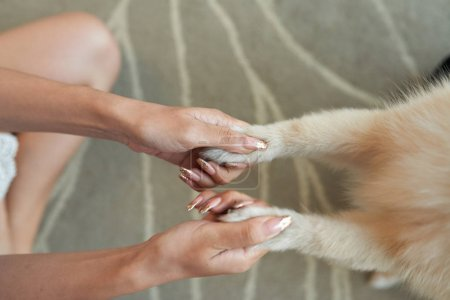 Female hands shaking hands of her little dog
