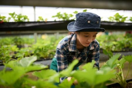 Asian farmer pulling out weeds while working at spacious modern greenhouse