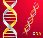 Gold and silver Dna icon Vector illustration on red background