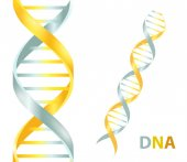 Gold and silver Dna icon Vector illustration on white background