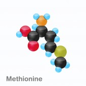 Molecule of Methionine Met an amino acid used in the biosynthesis of proteins