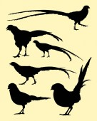 Pheasant birds silhouette 01 Good use for symbol logo web icon mascot sign or any design you want