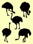 Ostrich animal detail silhouette 04 Vector illustration Good use for symbol logo web icon mascot sign or any design you want