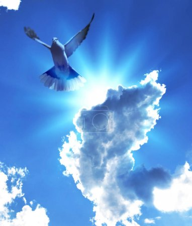 Photo pour Colombe en vol éclairée par les rayons du soleil filtrés à travers un nuage dans le ciel bleu - image libre de droit