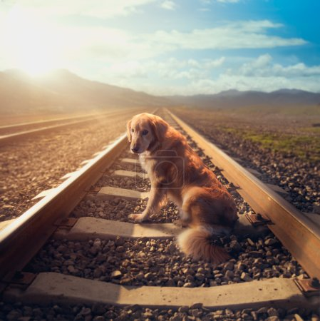 sad dog on railroad tracks