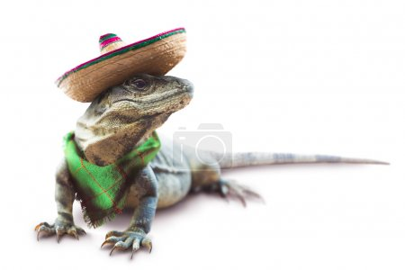 mexican Iguana with hat and scarf