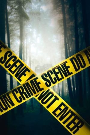 crime scene in the woods