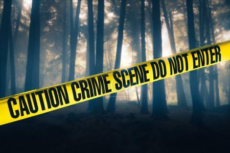 Photo for Crime scene tape in the woods - Royalty Free Image