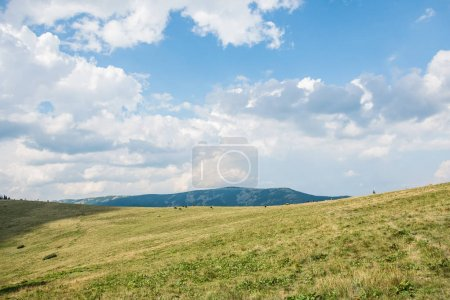 Green meadow under blue cloudy sky