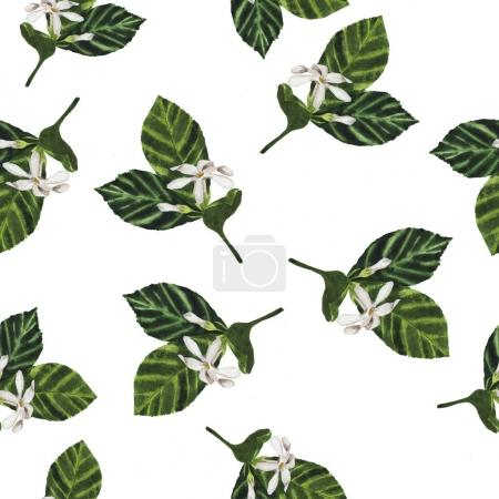beautiful hand-drawn illustration of green branches with white flowers seamless pattern background
