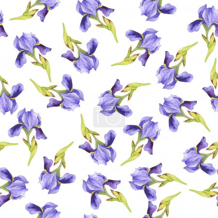 Seamless pattern with lilac fleur de lis flowers on white background. Hand drawn watercolor illustration.