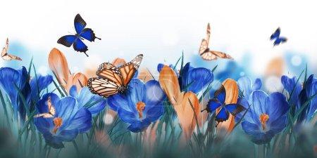 Photo pour Fleurs de crocus colorées avec des branches de saule et des papillons - image libre de droit