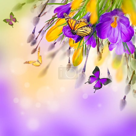 crocus flowers and butterflies