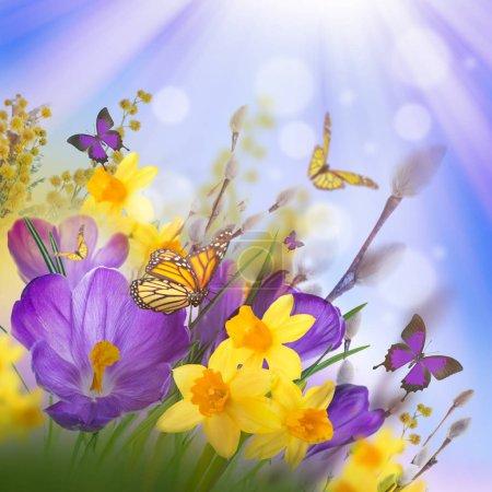 crocus flowers and butterflies