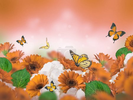 Photo for Bright orange and white chrysanthemums with flying butterflies on blurred orange background - Royalty Free Image