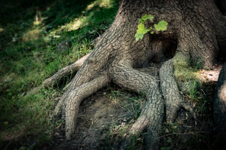 Tree roots with green grass