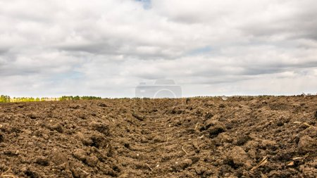 Plowed field after planting potatoes