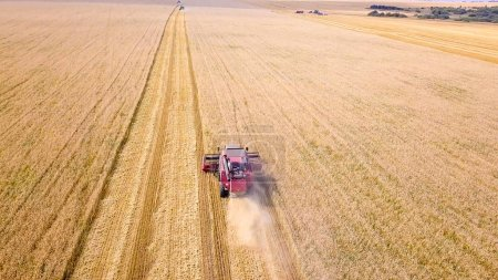 Combine harvester harvest wheat on the field
