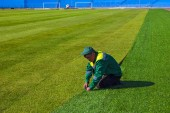 Football. World Championship 2018. Training stadium of the city of Togliatti, Samara region.
