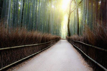 The arashiyama, Kyoto