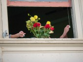 Flowers, feet, and cigarettes hanging out a window