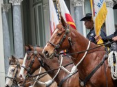 San Francisco Police Department horses from mounted patrol march