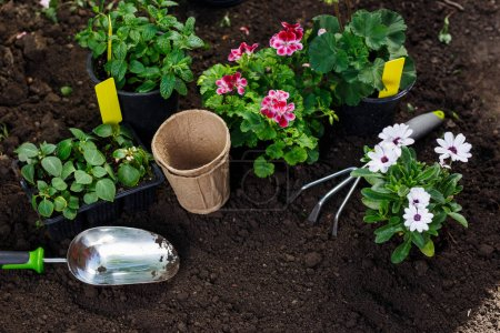 Photo for Gardening tools and flowers in pot for planting at backyard - Royalty Free Image