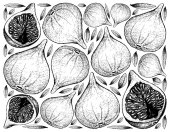 Hand Drawn Background of Fresh Fig Fruits