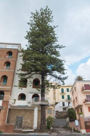 bottom view of pine growing in front of old european building, Anzio, Italy