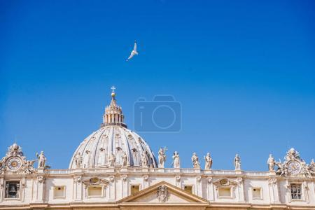 dove flying over famous St. Peter's Basilica, Vatican, Italy