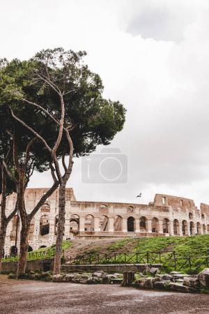 Photo pour Arbres verts devant les ruines de l'ancien Colisée par temps nuageux, Rome, Italie - image libre de droit
