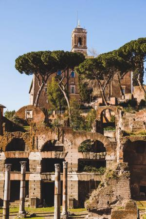columns and trees at Roman Forum ruins in Rome, Italy
