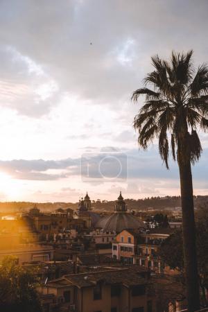 Photo pour Palmier et bâtiments pendant le coucher du soleil à Rome, Italie - image libre de droit