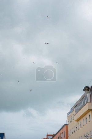 Photo pour Mouettes survolant les bâtiments européens de temps nuageux, Anzio, Italie - image libre de droit