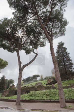 Photo for Ruins of the Roman Forum  in Rome, Italy - Royalty Free Image