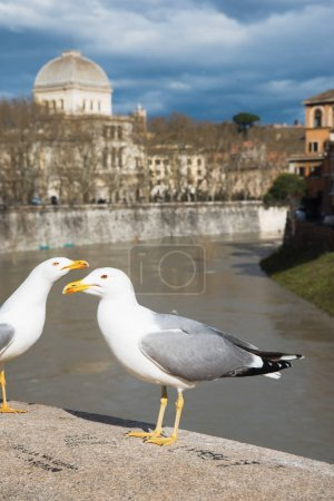 Photo for Gulls standing on bridge above Tiber river in Rome, Italy - Royalty Free Image