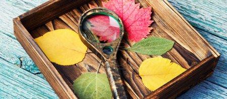 Oktober Blätter für Herbarium