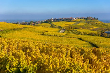 Beautiful autumn landscape with vineyards near the historic village of Riquewihr, Alsace, France - Europe. Colorful travel and wine-making background. Travel destination for vacation.