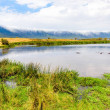 Hippo Pool in the Ngorongoro crater National Park....