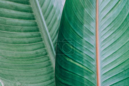 Photo for Tropical leaves texture. Leaf texture background - Royalty Free Image