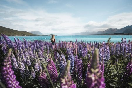 Photo for Photo of tropical seaside with young woman and magnificent view of purple flowers - Royalty Free Image