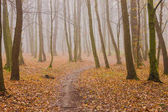 Bright orange leaves in foggy autumn forest