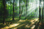 sun rays in green summer forest, morning beauty in nature, light in woods