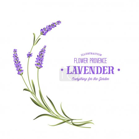Illustration for Bunch of lavender flowers on a white background. - Royalty Free Image