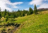 stream among the forest on hillside