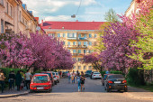 streets of small town in cherry blossom