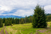 forested hills of Carpathians in spring